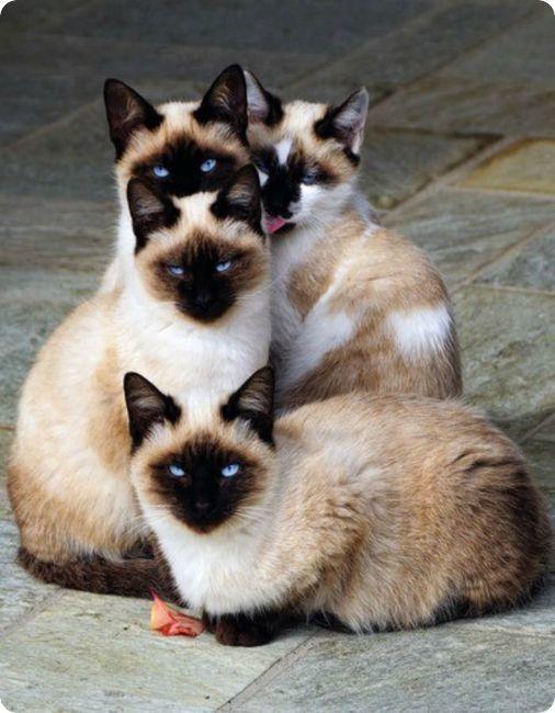 Pour les amoureux des chats Quatre10