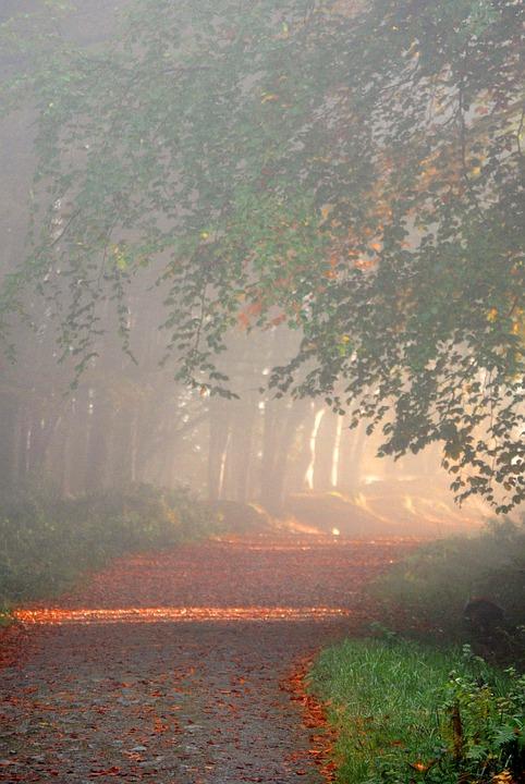 Je ne sais pas où je vais (Thomas MERTON, cistercien) Woods-11