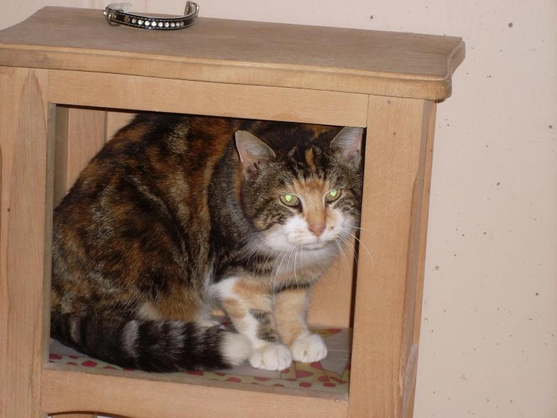 MIMI, adorable chatte tricolore de 16 ans 13009910