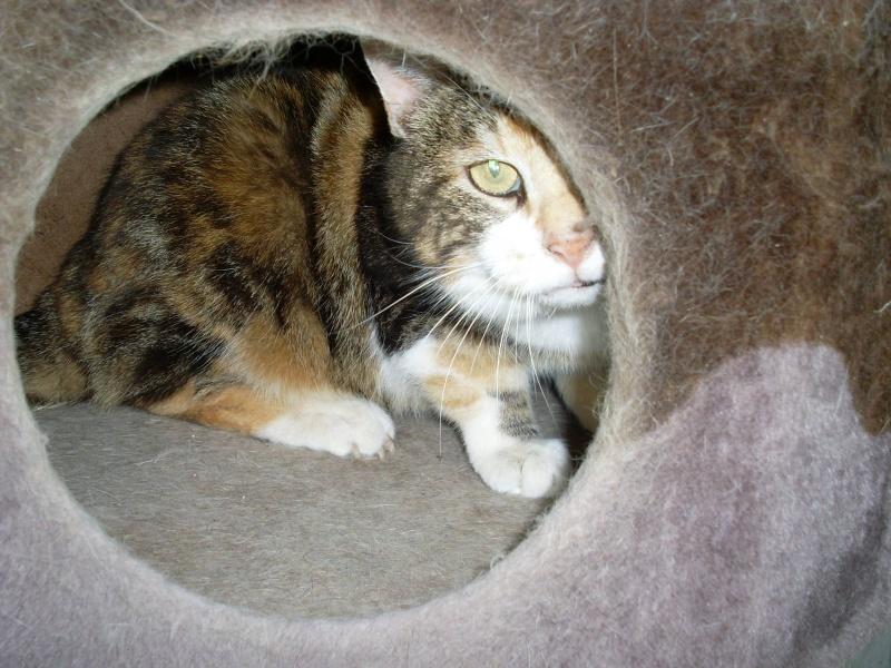 MIMI, adorable chatte tricolore de 16 ans 13340510