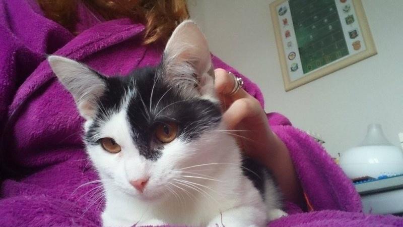 MACHA, très belle chatte junior de 8 mois, noire et blanche - Page 2 Masha10