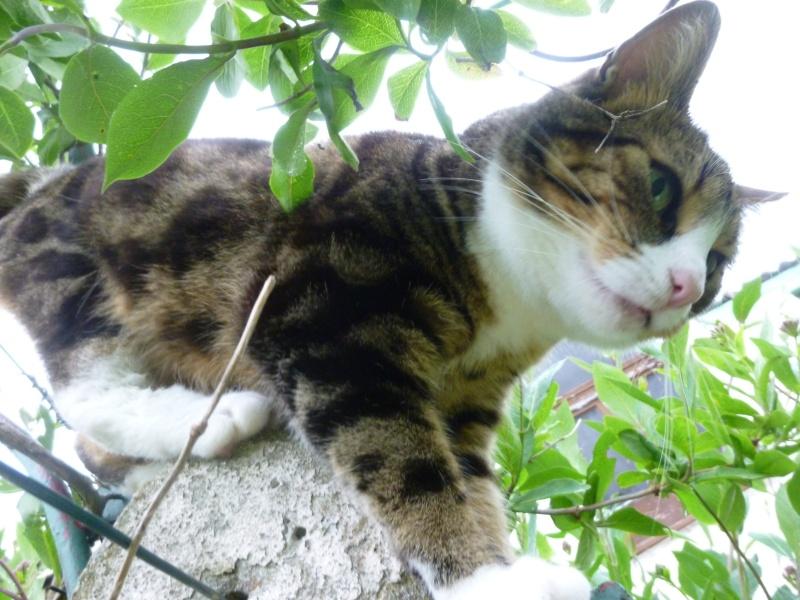 SIENNA, jolie petite chatte marbrée de  P1030148