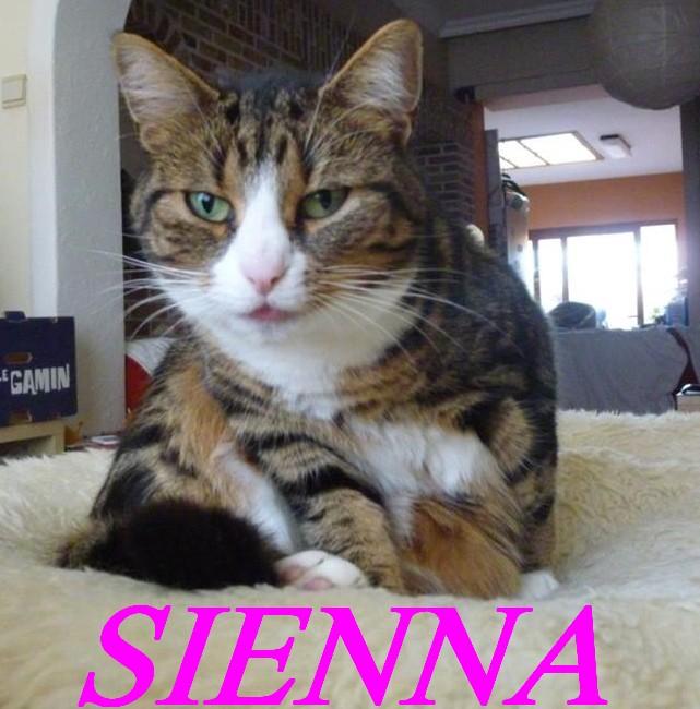 SIENNA, jolie petite chatte marbrée de  Sienna15