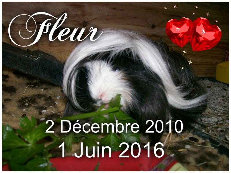 Mémorial pour nos chons disparus en cette année 2016 Pizap_12