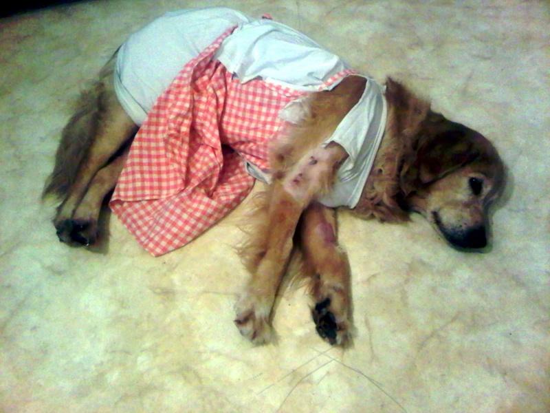 Ensemble vous pouvez tous m'aider à soigner ma chienne. :-) Img-2010