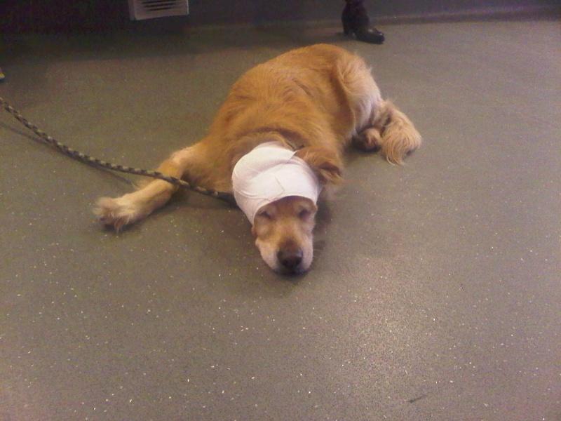 Ensemble vous pouvez tous m'aider à soigner ma chienne. :-) Img-2011