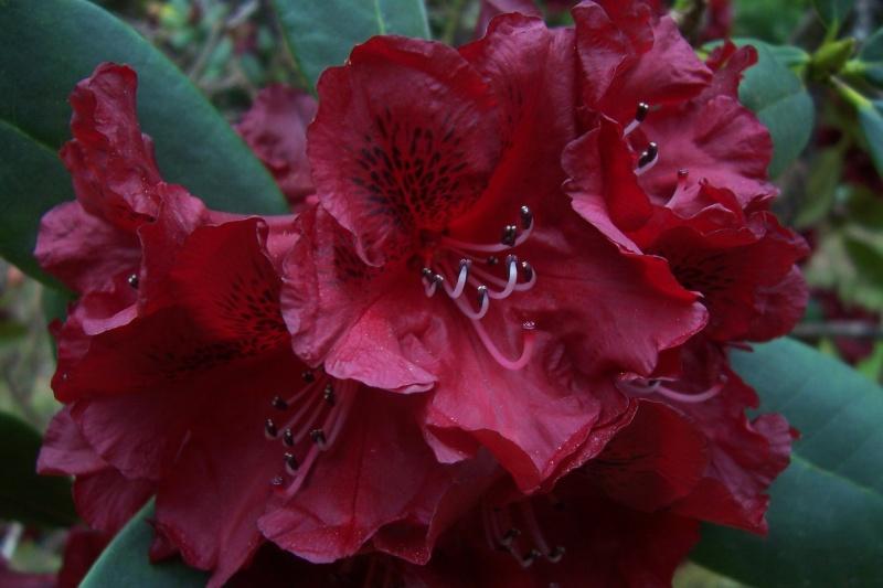 joli mois de mai, le jardin fait à son gré - Page 2 100_7811