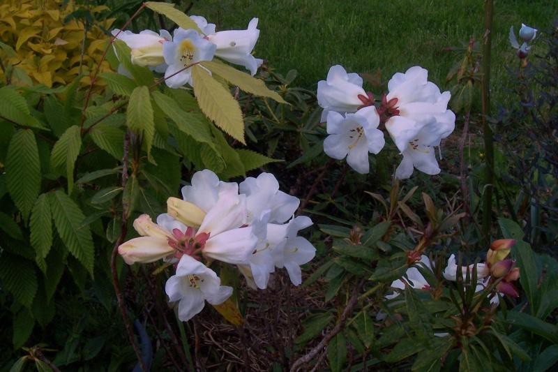 joli mois de mai, le jardin fait à son gré - Page 4 100_8011