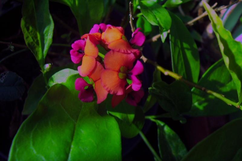 joli mois de mai, le jardin fait à son gré - Page 4 100_8012