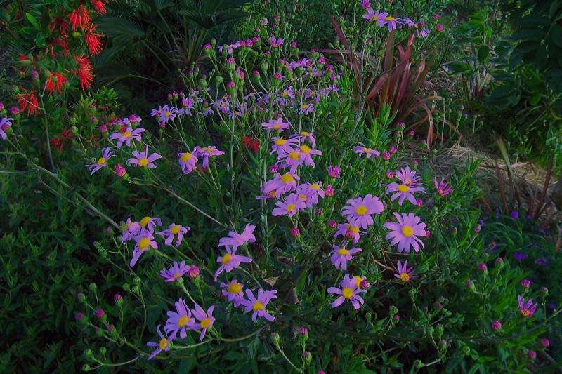joli mois de mai, le jardin fait à son gré - Page 4 100_8013