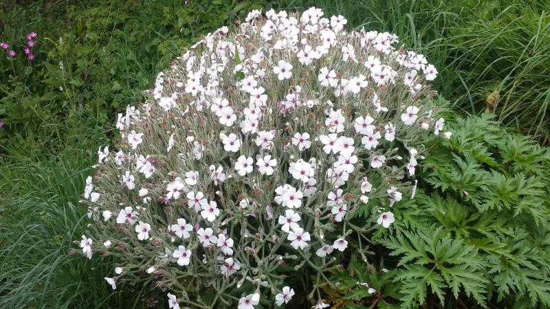 joli mois de mai, le jardin fait à son gré - Page 2 20160411