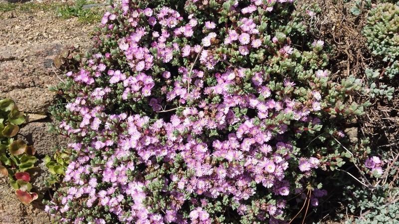 joli mois de mai, le jardin fait à son gré - Page 2 20160412