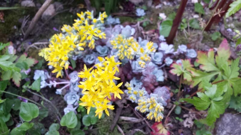 joli mois de mai, le jardin fait à son gré - Page 5 20160517