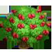 Vous cherchez un arbre ? Venez cliquer ici !!! Dogros10