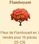 Flamboyant => Fleur Flamboyant Sans_265
