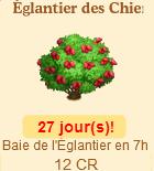 Églantier des Chiens => Baie de l'Eglantier Sans_334