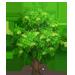 Vous cherchez un arbre ? Venez cliquer ici !!! Swampa12