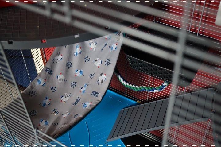 Photos de vos cages - Page 6 10580210