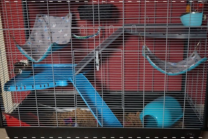 Photos de vos cages - Page 6 11141110