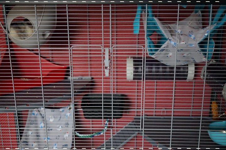Photos de vos cages - Page 6 9874_610