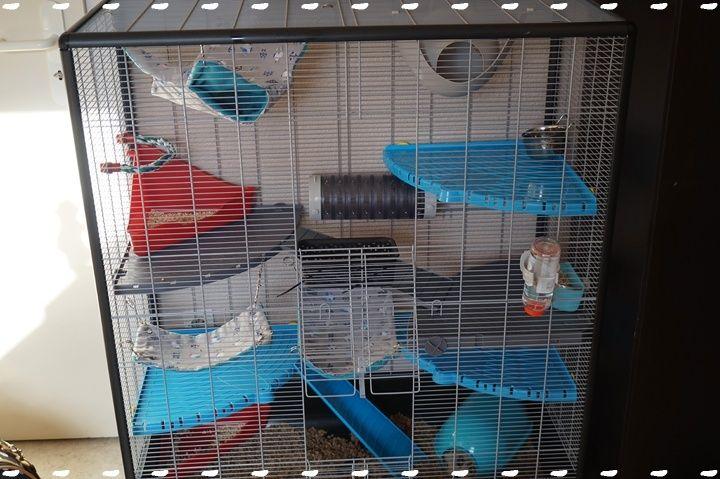 Photos de vos cages - Page 6 Dsc09310