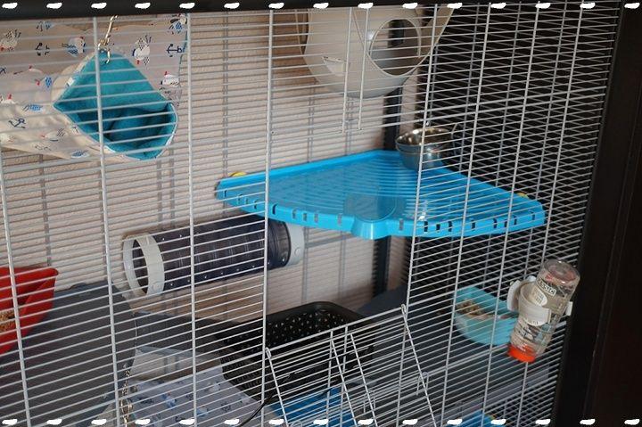 Photos de vos cages - Page 6 Dsc09312