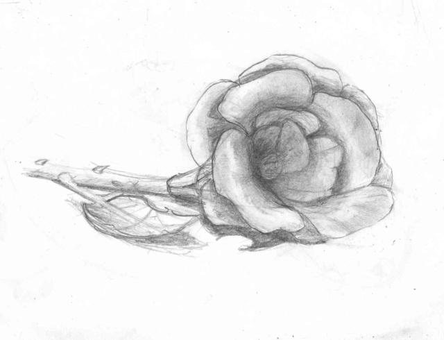 Un dessin par jour, qui veut jouer? - Page 3 Rose0010