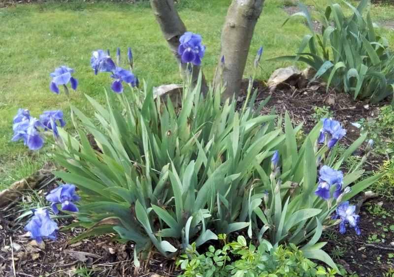 Blue..........bleu !!! - Page 5 00617