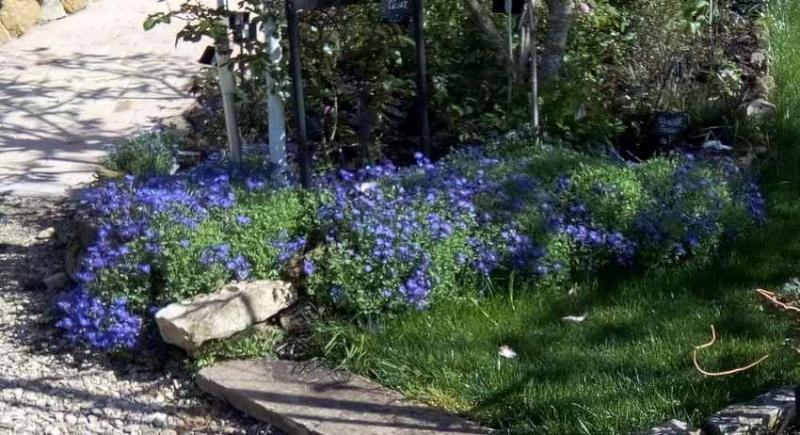 Blue..........bleu !!! - Page 5 01114