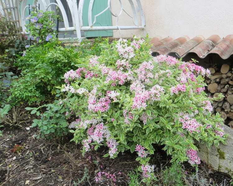 Le jardin en rose ! 01218