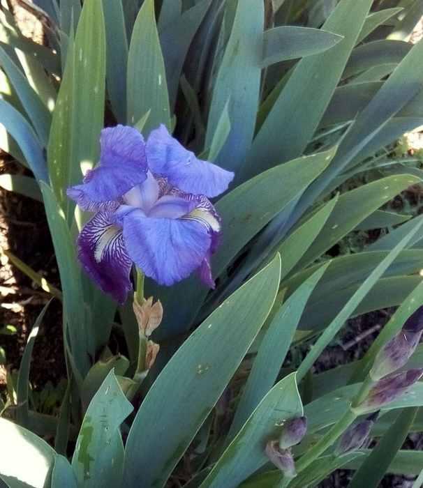 Blue..........bleu !!! - Page 4 02610
