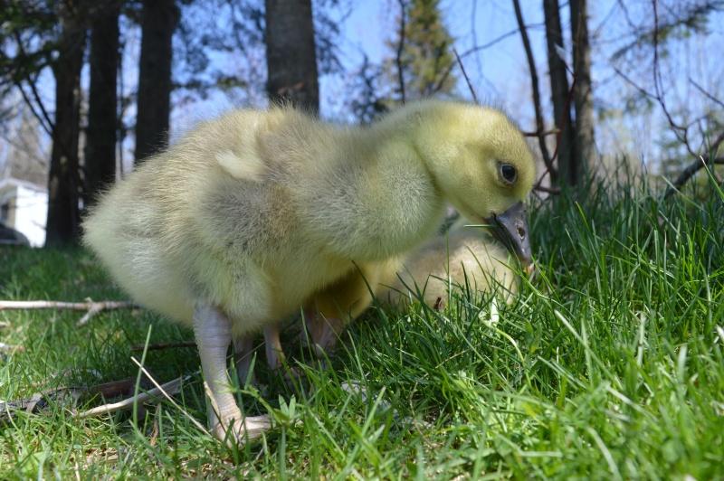 MAI-JUIN les animaux au printemps : vos plus belles photos Dsc_0112