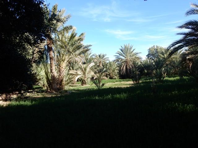 [Maroc Camp/Dernières nouvelles] Camping HAKKOU à AOUFOUSS Copie_13