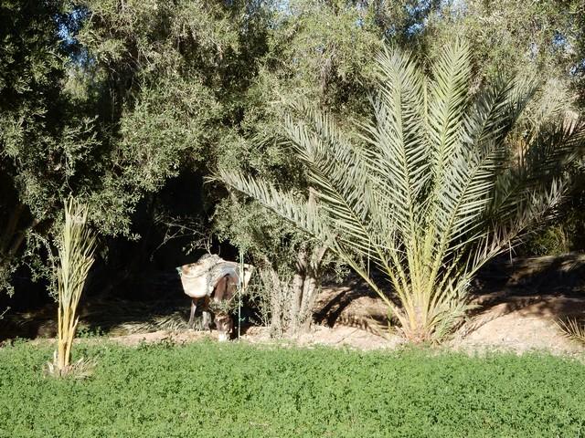 [Maroc Camp/Dernières nouvelles] Camping HAKKOU à AOUFOUSS Copie_14