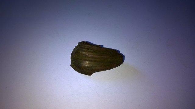 Balle Lebel 8mm Wp_20129