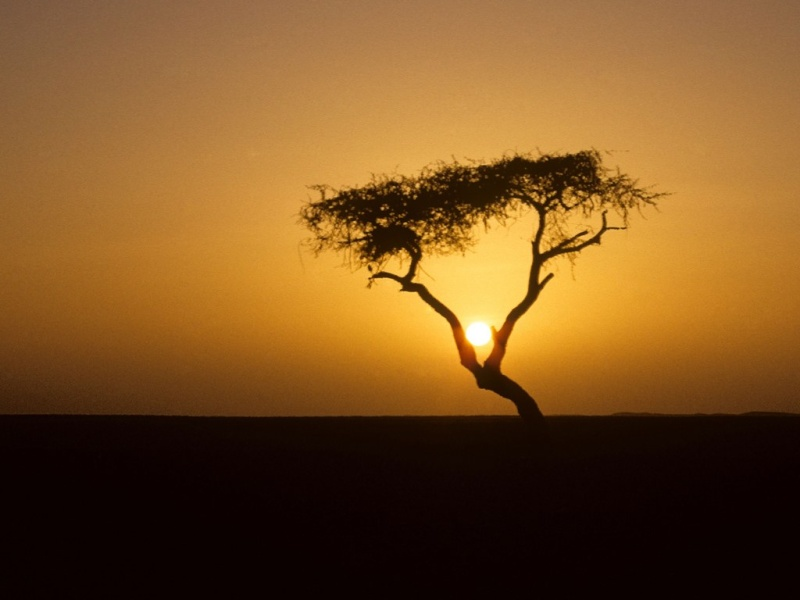 L'arbre du Ténéré  Arbre-10