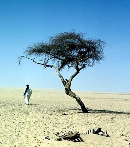 L'arbre du Ténéré  Tree-o10