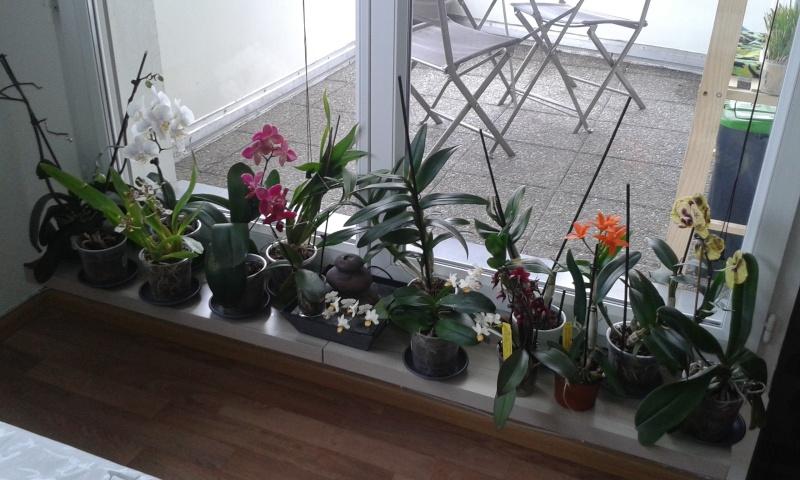 Les orchidées chez Flo ! 20160413