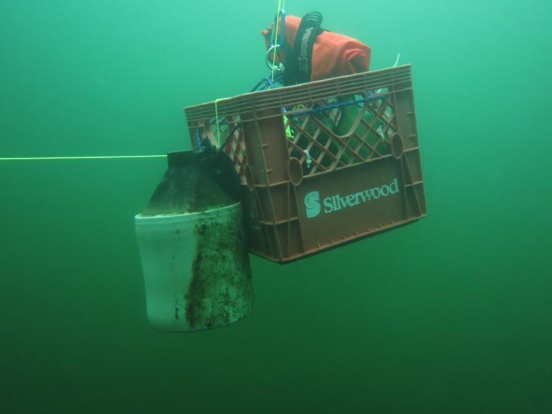 Image de plongée (et test pour voir si je comprends le nouveau système!) Img_0112