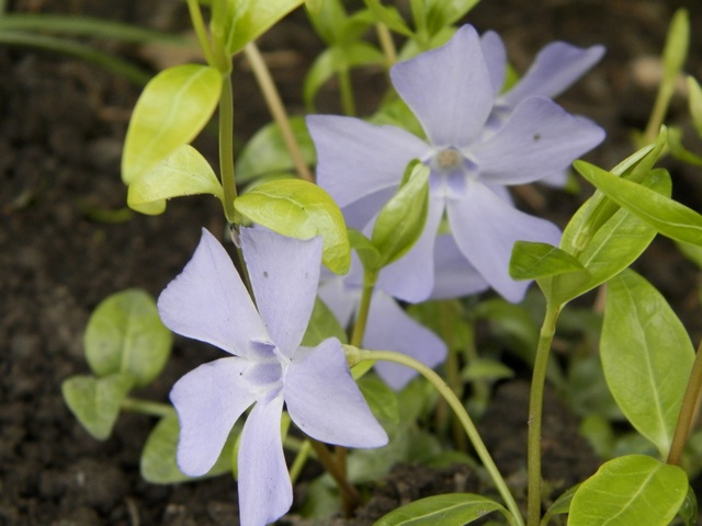 Blue..........bleu !!! - Page 2 Vincam10