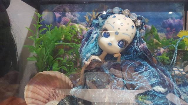 [dal custo]ecume de mer, nouvel aquarium p.3 - Page 3 13265910