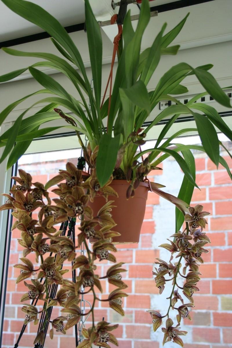 orchidays 2016 au chateau d'enghien Img_2914