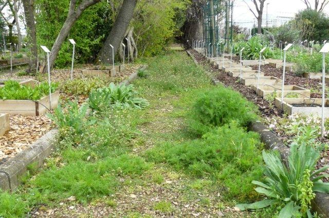 (63) Jardin botanique de La Charme-Montferrand  Allye10