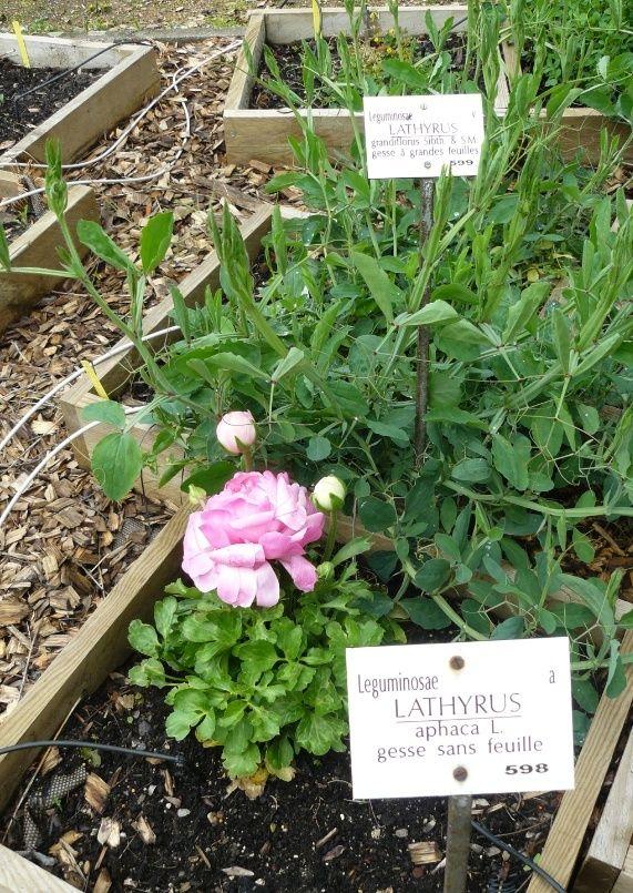 (63) Jardin botanique de La Charme-Montferrand  Erreur10