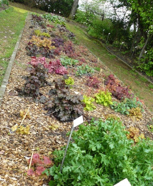 (63) Jardin botanique de La Charme-Montferrand  Heuch10