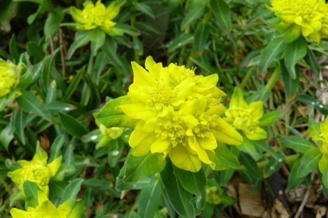 (63) Jardin botanique de La Charme-Montferrand  Myst10