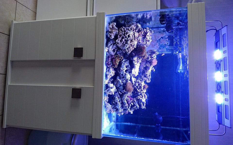 les 500 litres d'eau de mer d'angy et ced  Dsc_0115