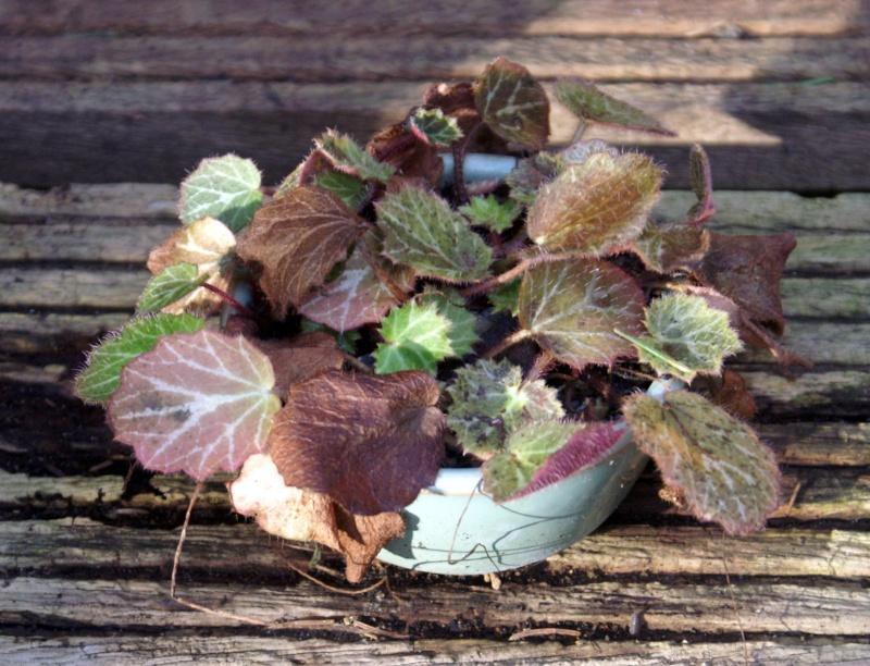 Voici mes plantes d'accompagnements Pict0011