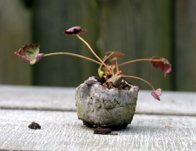 Voici mes plantes d'accompagnements Pict0012