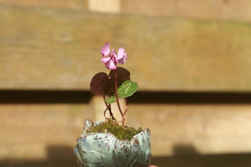 Voici mes plantes d'accompagnements Pict0013